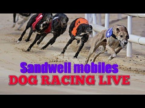 Dog Racing Live