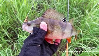 Рыбалка на окуня, вертушки рулят