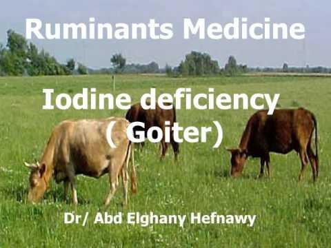 Nutritional deficiency diseases ruminant Dr Abdelghany  2016