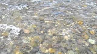 Магадан. Рыбалка на Оле июль 2009.(Ежегодно летом (июнь и июль) на Колыме идет путина горбуши и кеты, рыба приходит в реки Магаданской области..., 2010-11-04T19:39:56.000Z)
