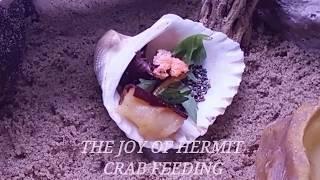 DietTracker-MHK App Feature- The Joy of Feeding Your Hermies