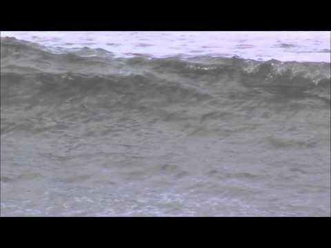 Sharks At Flagler/Beverly Beach