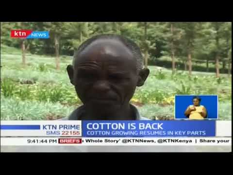Cotton growing resumes in key parts of the country