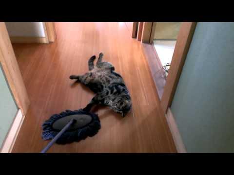 モップと動かない猫