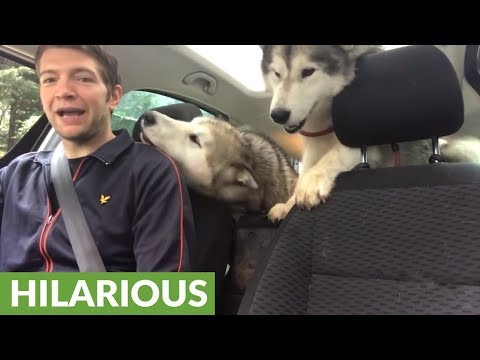 Dogs can't contain excitement after doggy daycare