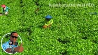 Tea Plantation - Puncak Cianjur 2010