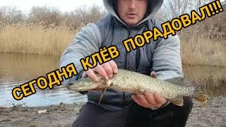 рыбалка щука осень Ловим щуку на живца с берега Убрал мусор Наловил щуки