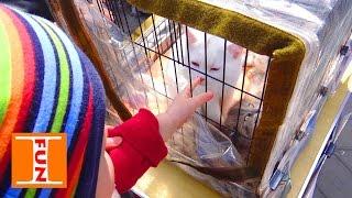 Ваня на птичем рынке играет с котятами Bird market Vanya playing with kittens
