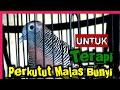 Terapi Perkut Lokal Macet Bunyi   Mp3 - Mp4 Download