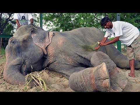 This Elephant Was Chained For 50 Years,Then When He Got Freed His Reaction Broke Rescuer's heart