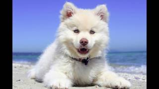 How long does it take to potty train a puppy? Find out here - FREE Mini Course Here