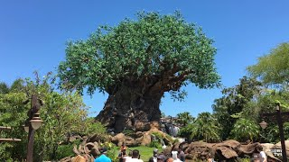 Animal Kingdom Live Stream (Pandora) and Fan Name Reveal - 10-20-17 - Walt Disney World