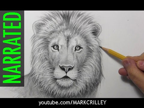 How to Draw a Lion [Narrated, Step by Step]