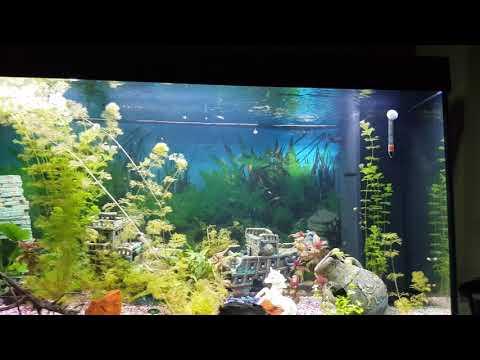 Juwel Rio 350 Liter Aquarium