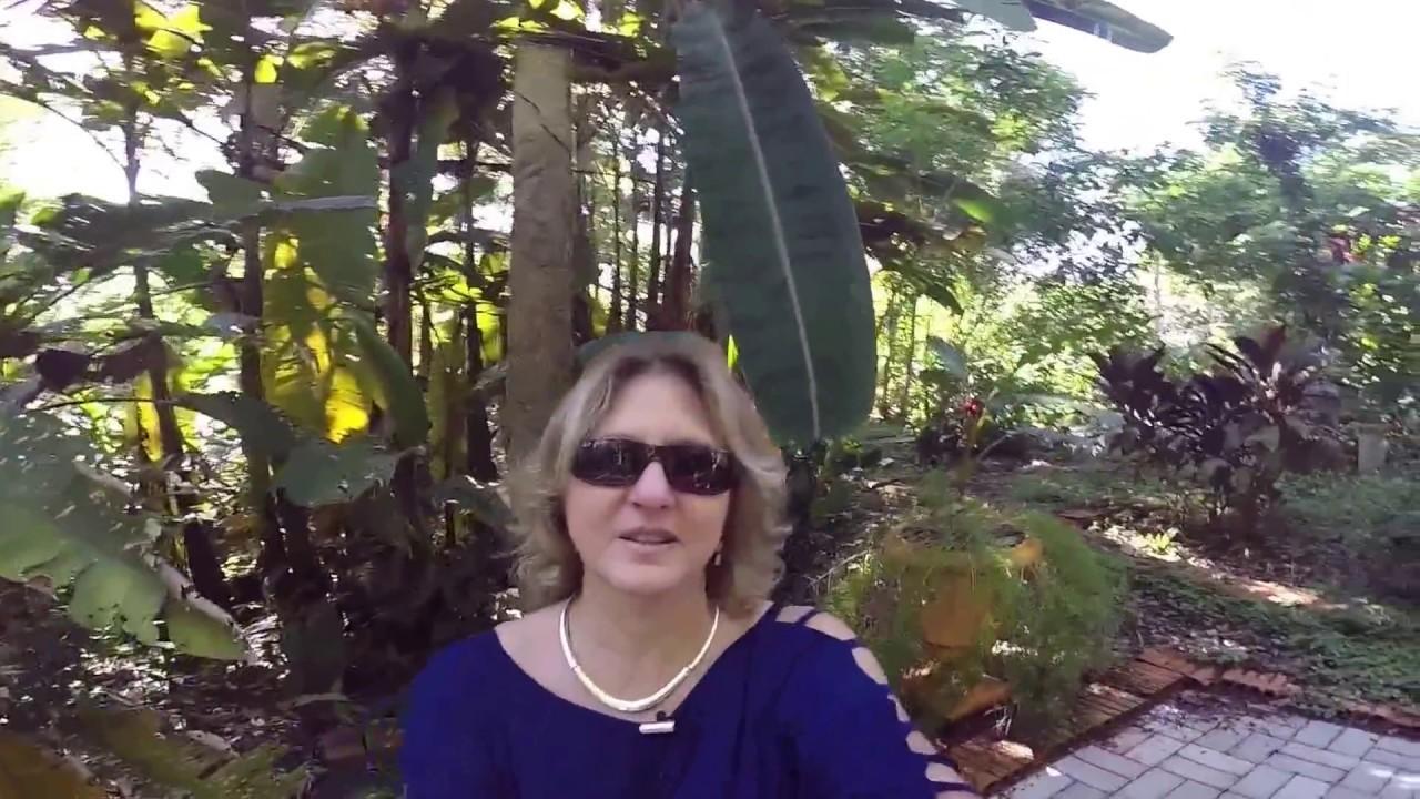 CEAEC – Considerações Finais – Katia Di Giaimo