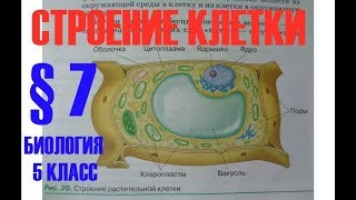 Биология 5 кл § 7 Строение клетки  (Автор В.В.Пасечник)
