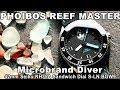 Phoibos Reef Master Microbrand Dive Watch ⌚️🌊