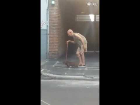 Heartwarming: patient dog walks extremely slow so that the old man can keep up