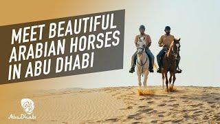 Discover centuries-old heritage in Abu Dhabi | Visit Abu Dhabi