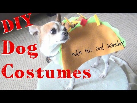 DIY Halloween Dog Costumes! ♥  Nic And Pancho Collaboration