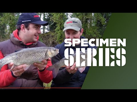 Winter Chub Fishing Tips & Tactics