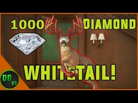 Huge Albino Puma + Diamond Cinnamon Teal YouTube