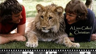 Gambar cover A Lion Called Christian - The True Story of Christian the Lion HD