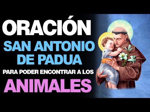 🙏 Poderosa Oración a San Antonio de Padua PARA ENCONTRAR ANIMALES ¡Socórreme! 🐶