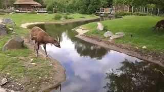 Экскурсия в Пражский зоопарк!(, 2014-05-19T21:07:19.000Z)