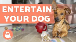 How to ENTERTAIN your DOG at HOME? 🐶 5 Helpful Ideas!