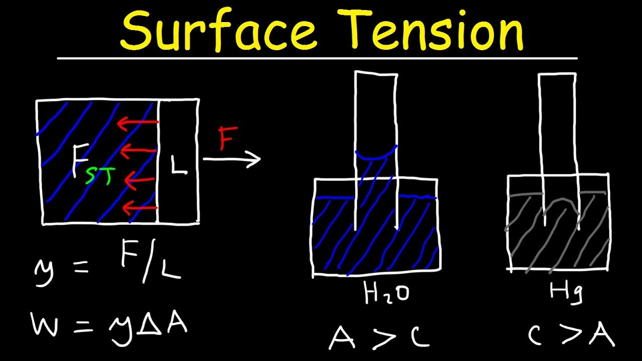 cohesion surface tension and mass flow Surface tension supporting the since a smaller tube holds less mass 118 cohesion and adhesion in liquids: surface tension and capillary action by.
