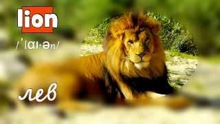 Wild Animals – Дикие животные на английском языке