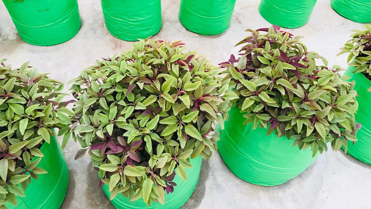 Maadi thottam/keerai la super a grow akiruchu/How to start maadi thootam/Terrace garden
