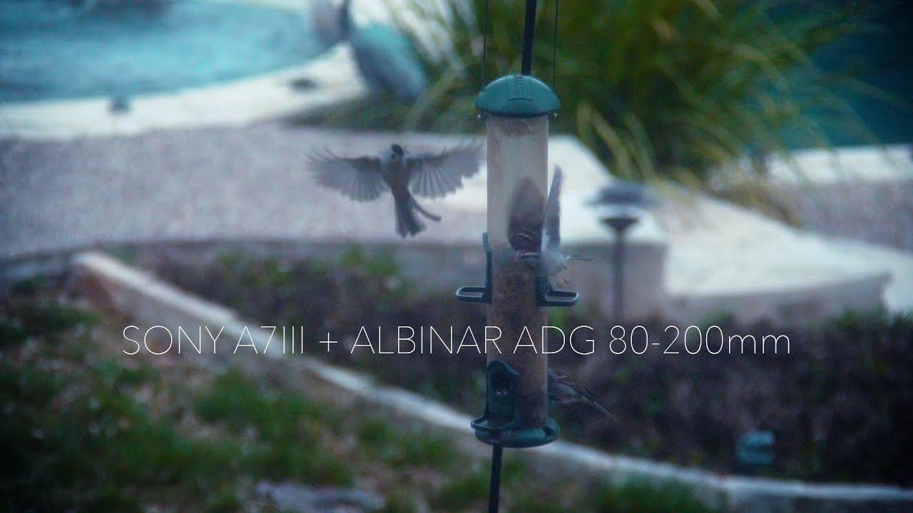 Albinar ADG 80-200mm + Sony A7iii at 120 fps (Footage Test on Texas Sparrows)