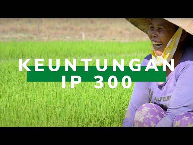 Tingkatkan Produktivitas Padi, Petani di Bulungan Terapkan IP 300