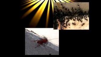 Pest Control Swedesboro NJ   Premier Exterminator service in Swedesboro