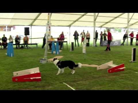 flyball crash on Czech flyball championship 2012