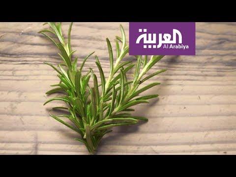 صباح العربية: اكليل الجبل ينشط الذاكرة  - نشر قبل 45 دقيقة