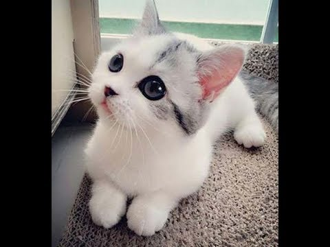 Cute Kittens videos - Cute KITTEN Compilation 2018