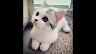 funny pet compilation