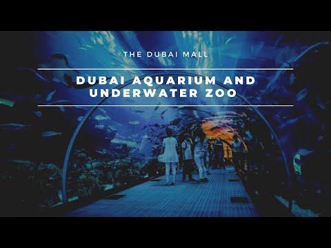 Dubai Aquarium & Underwater Zoo 2019
