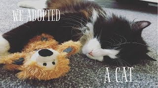 WE GOT A CAT! ADOPTING FROM THE RSPCA - VLOG 10