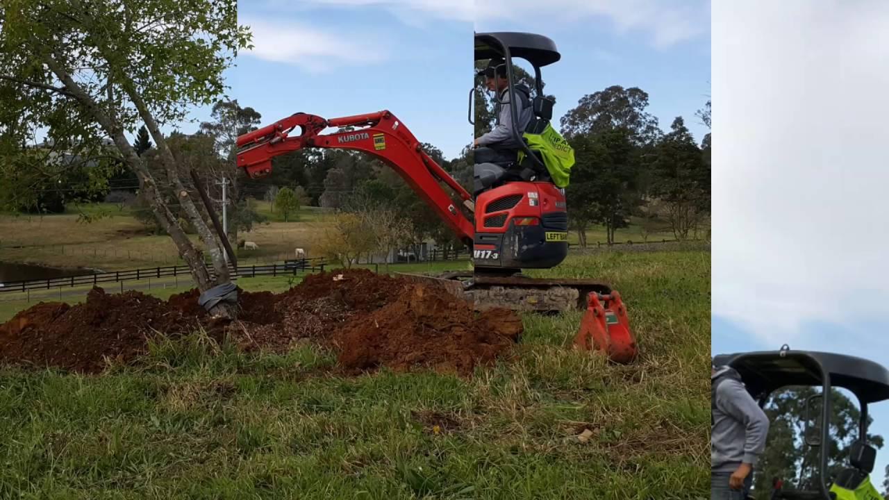 Transplanting A Maple Tree