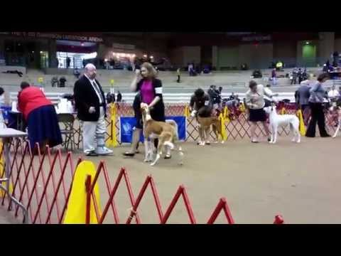 Best of Breed IHCUS Supported Entry at CKC, 01/03/2015