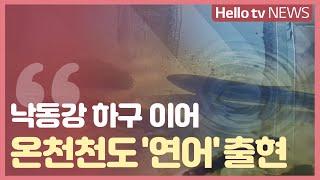 [이슈&피플] 온천천에서 발견된 연어, 의미는?…