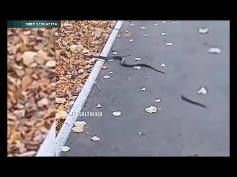 АТН Харьков: Возле харьковской школы заметили змею - 17.10.2019