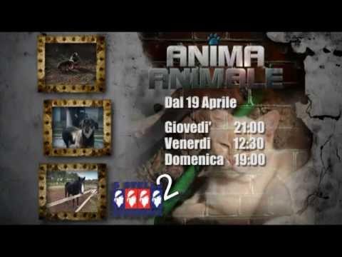 """Promo del format televisivo """"ANIMA ANIMALE"""" di Daniele Fiori n° 2"""
