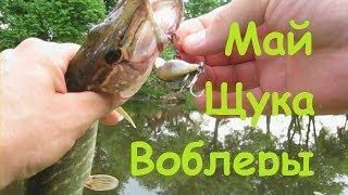 Ловля щуки на воблеры. Спиннинг на реке _ Май 2013.(http://demon11011985.blogspot.ru/ Видеоотчет о ловле щуки на воблеры. Спиннинг на реке Вязьма. Май 2013 года. Поимка щуки на..., 2013-06-06T17:51:42.000Z)