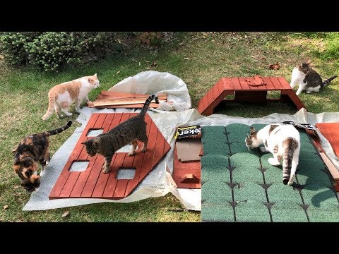 we-surprised-our-cats-with-a-7-bedroom-cat-house-!!