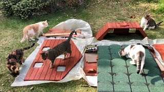 We Surprised Our Cats with a 7 Bedroom Cat House !!
